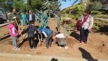 Plantación de árboles en el Paseo de la Isla Verde