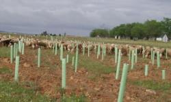 Zonas reforestadas en vías pecuarias de la provincia. Foto: JCCM