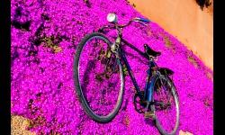 La senda violeta