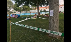 Plaga de galeruca en la piscina municipal