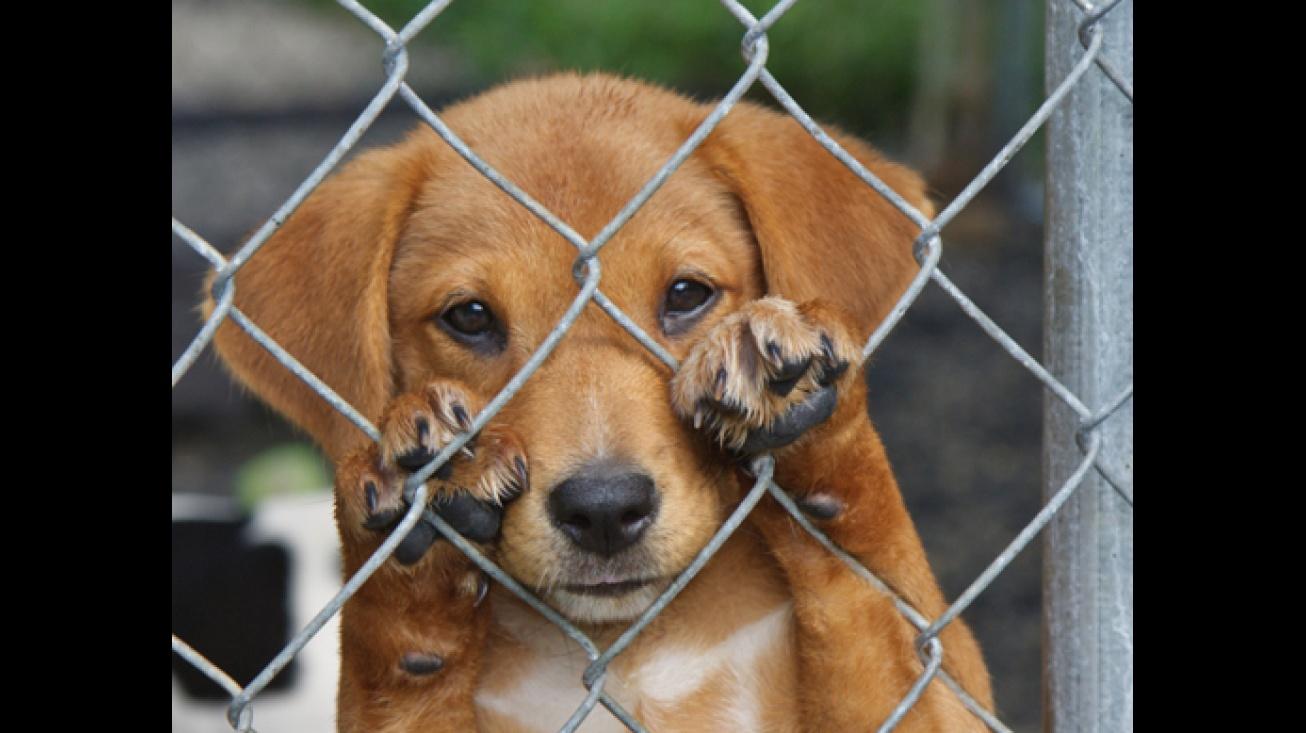 Campaña de recogida de firmas contra el maltrato animal
